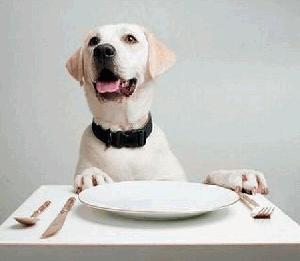 Hrana za pse Artemis