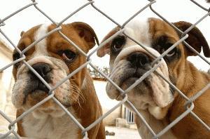 Antidepresivna zdravila tudi za pse