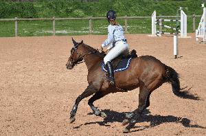 Jahanje konjev v Sloveniji