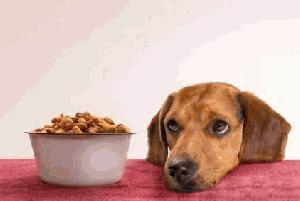 Hrana za vašega psa