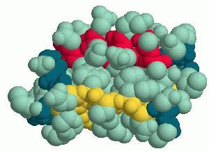 Proteini, gradniki življenja