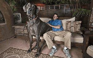 Ste že srečali tako ogromnega psa?